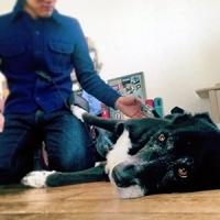 吉高サンとも共演した、カメラマン半沢さんの愛犬ジョジョ。日本語が分かるのか?と思うほど頭がいい